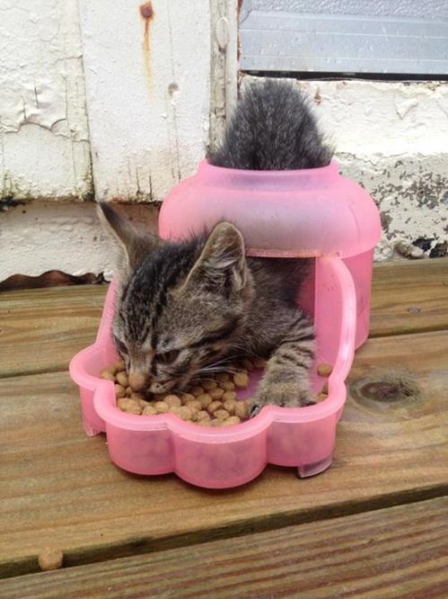 Logique de chat !!!