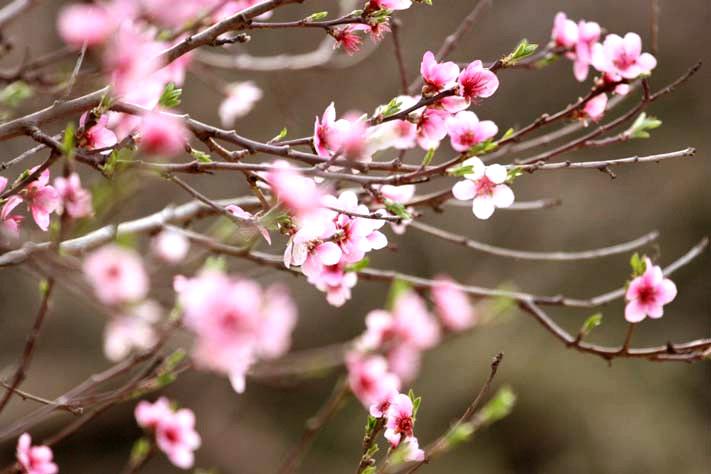 - Juste le printemps -