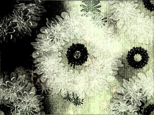 design de noir et de blanc