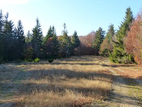 Le Bois de Miquel (L'Espérou - Aigoual)
