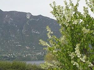 Sur les rives du lac du Bourget 2