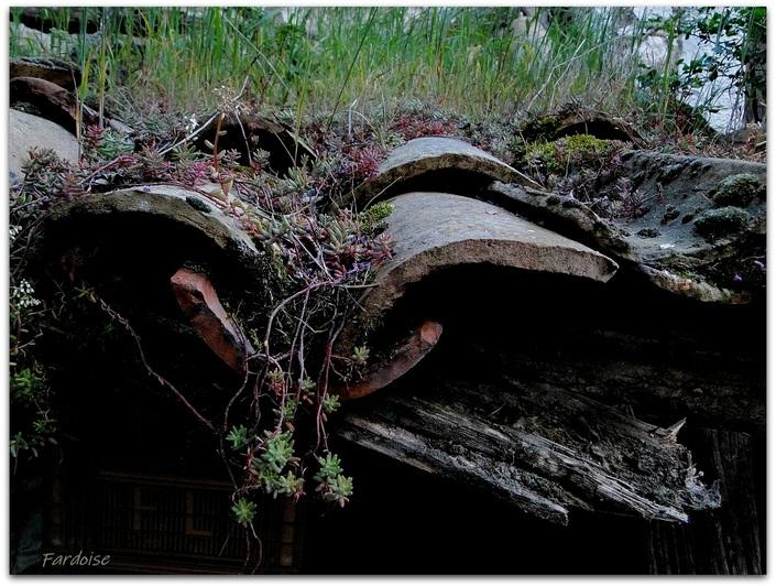 Quand la végétation réinvestit une vieille toiture