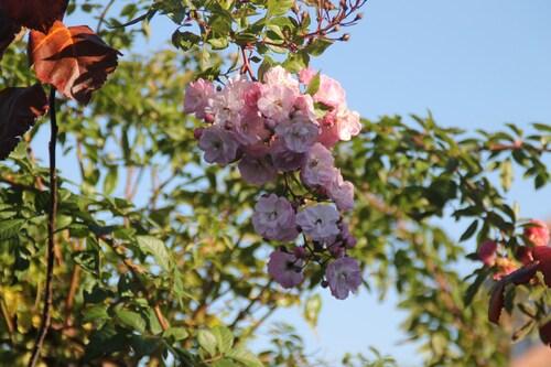Ghislaine de Filigonde Pink