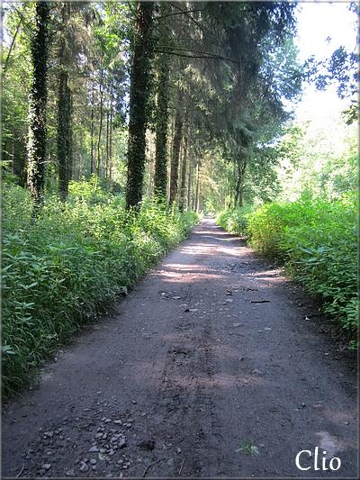 Pour Mildéfis n° 168 : Un sentier, un chemin