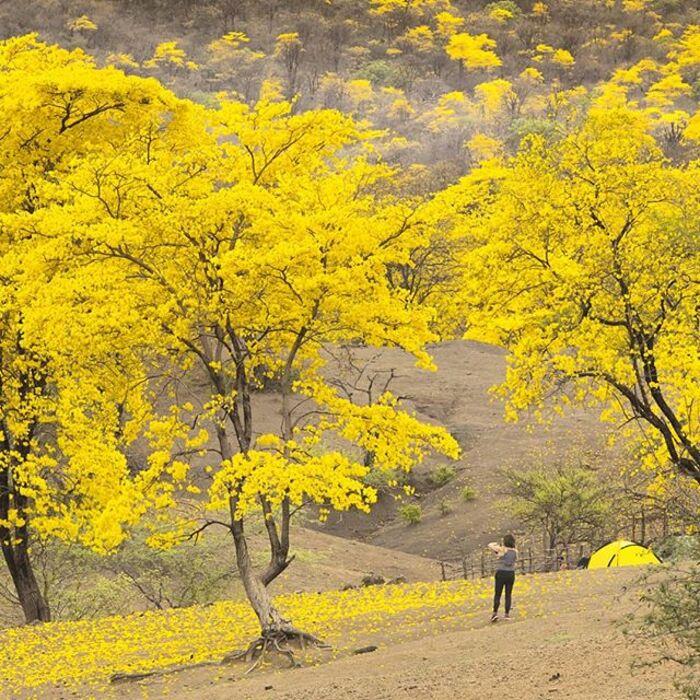 Dans La Province De Loja, Située Au Sud De L'Équateur -  Un Phénomène Naturel Spectaculaire -  Se Répète Tous Les Ans -