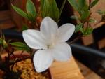 Identification par les fleurs !