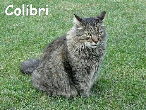 colibri1.jpg