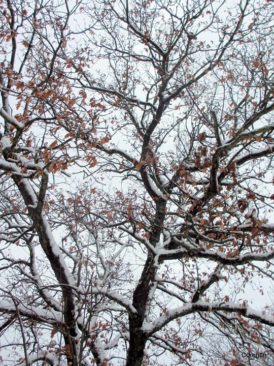 x04---haut-de-l-arbre.JPG