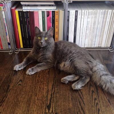 L'ex chaton violet coule des jours heureux