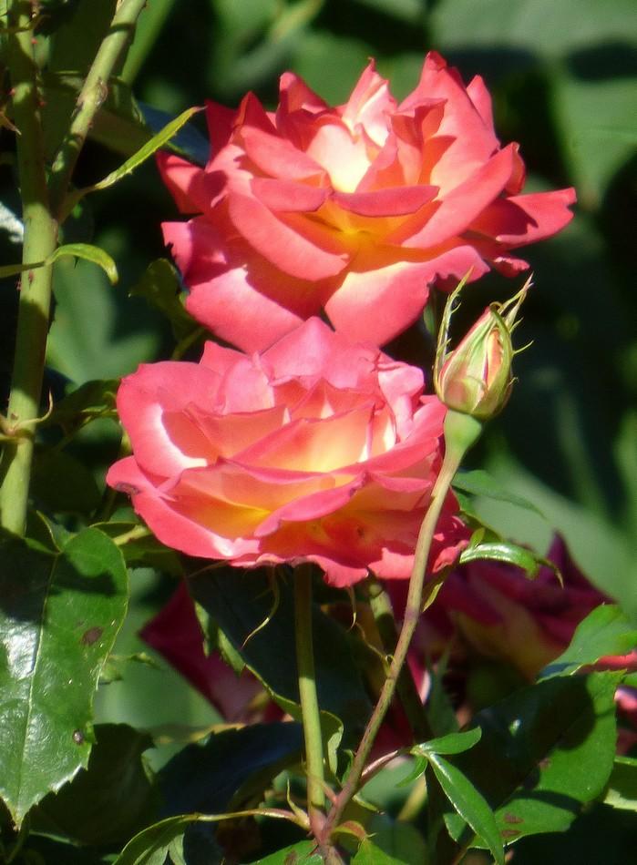 Fleurs de Picardie