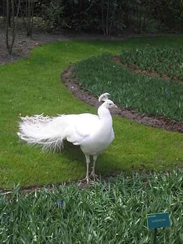 HOLLANDE-2007-067.jpg