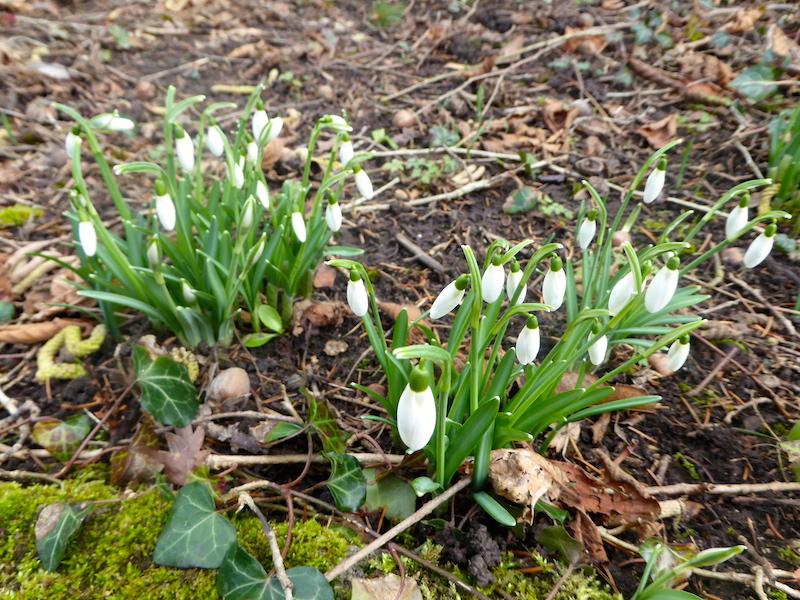 Le printemps tarde, ou l'hiver est revenu en Touraine?