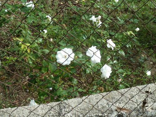 Dernières fleurs de l'année