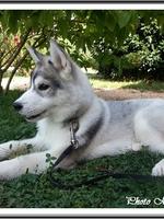 Niklaus (4 mois)