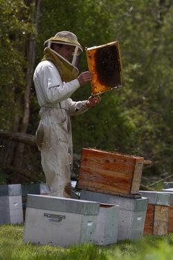 Entre miel et terre