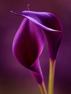 Fleurs  coquines :