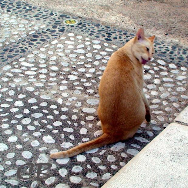 chat saint paul