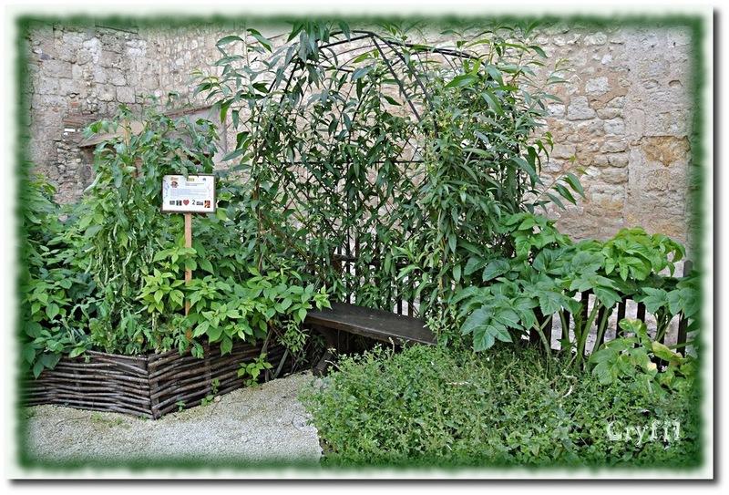 Un jardin d'aromatiques