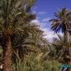 vallée du drâa - la palmeraie