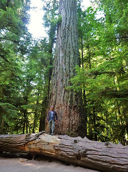 Jour 25 Cathedral Grove Norbert
