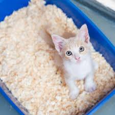 Box fur Katzentoiletten
