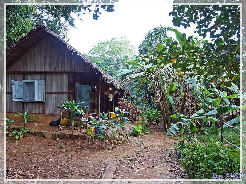 Promenade dans la forêt de Nosy Sakatia : Bébé avait repéré l'indiscret ! - Madagascar