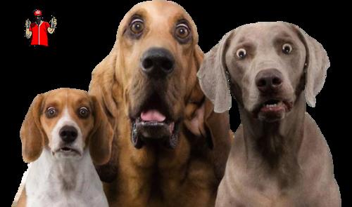 Tube Trio de chiens