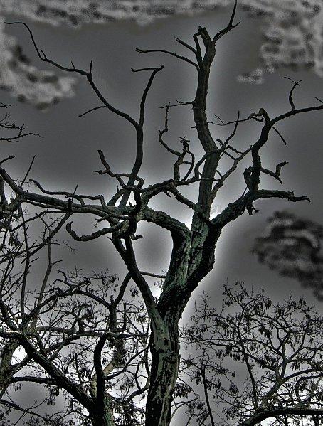 arbrehdr.jpg