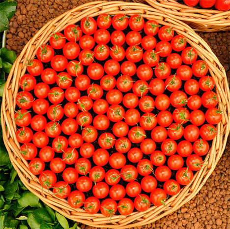Des photos simplement parfaites - Tomates