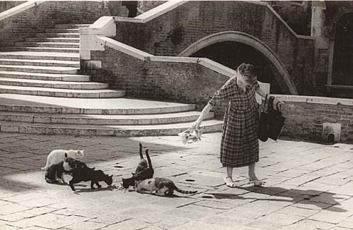 Sur les traces des chats de Venise !