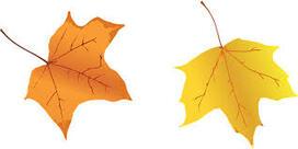 """Résultat de recherche d'images pour """"automne feuilles"""""""