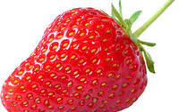 Fiches documentaires fraises