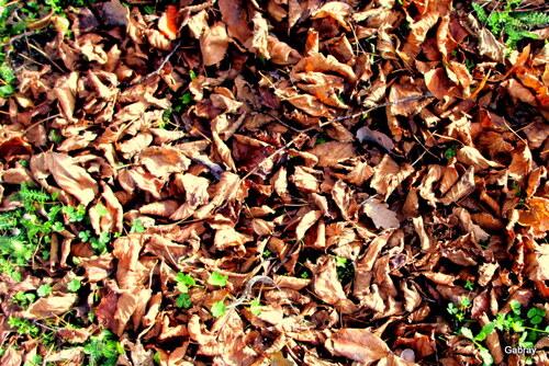 Feuilles au sol