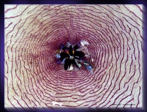 Fleur d'une succulente