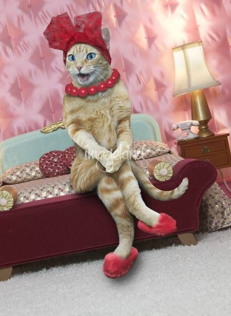 """Sexy Cat"" by John Lund: A sexy cat sits on the edge of a bed wearing a red hat, red slippers and a red necklace giving new meaning to the term sex kitten."