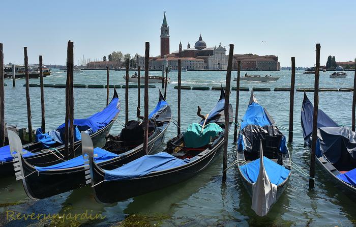 Venise : En vert et contre tout