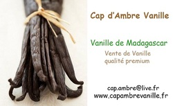 Financier Chocolat/Vanille