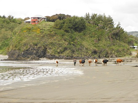 Puerto Varas > Ancud Chiloé