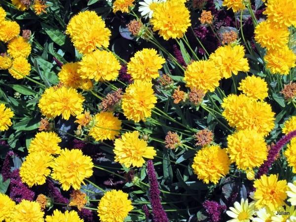 F13 - Fleurs jaunes