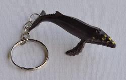 Catégorie Animaux aquatiques - Mammifères marins