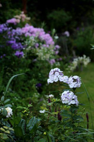 Le jardin comme exutoire (20)