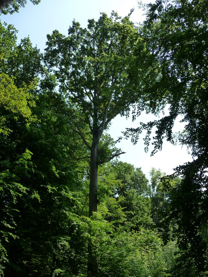 A l'ombre de la Forêt Domaniale de Creuse