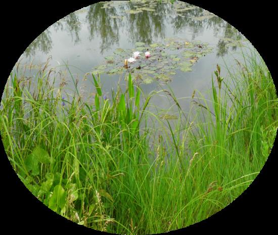 Tubes herbe,bassins