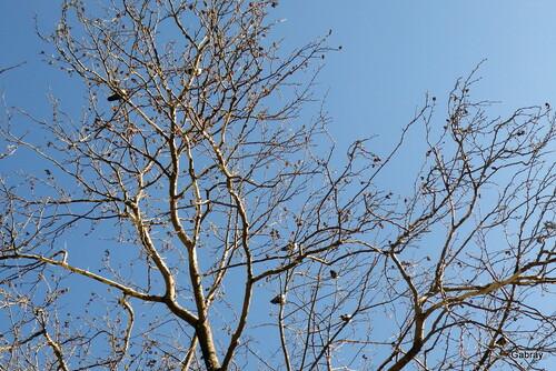 Des oiseaux sur les branches!