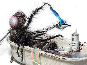 Funny-Fly-640x479.jpg