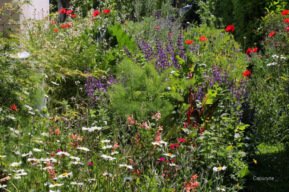 Scènes de jardin en mai....3
