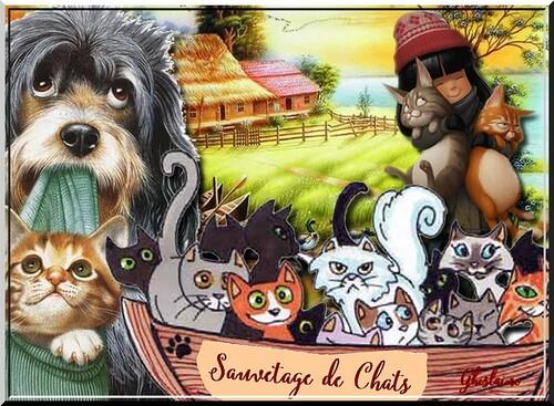 """Défi chez Fée capucine """"Le sauvetage des chats"""""""