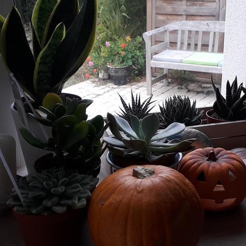 Bonjour le mois de novembre, le mois d'octobre pele-mele