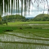 Ile de Bohol