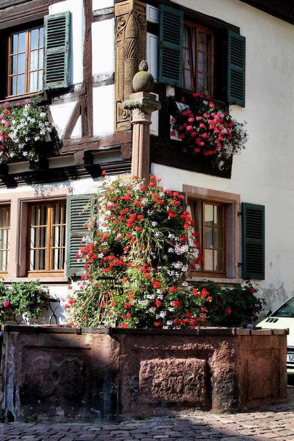 Alsace route des vins de Bergheim à Bernardswiller Saint-Hippolyte fontaine rue des Cigognes